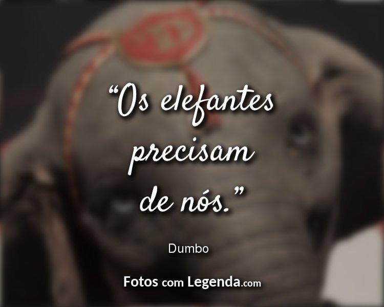 Frases Dumbo Os elefantes precisam.